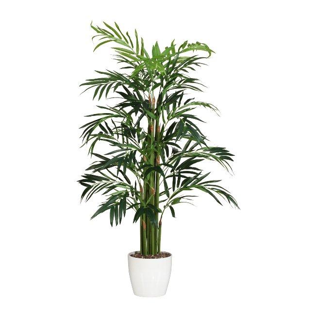 Bambuspalme